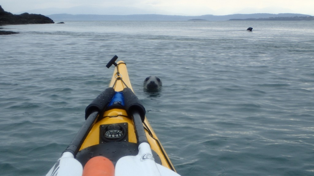 Ynys Dulas - Seals