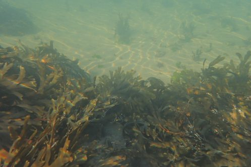 An underwater picture – no idea why