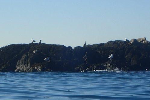 Seals n birds