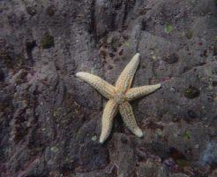 """""""Five Star"""" Starfish underwater shot"""